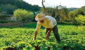 agroturismo can marti san juan sant joan ibiza eivissa agricultura ecologica