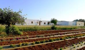plantacion can sastre ibiza punica delicatessen floral eivissa sant miquel san miguel
