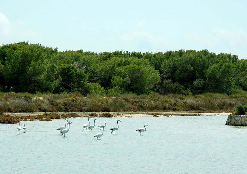 parque natural de ses salines las salinas ibiza eivissa