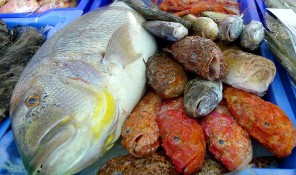 pescaderia can bellotera joan torres pescados y mariscos sant jordi san jorge ibiza eivissa